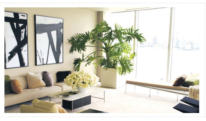 Fresh Air can be created with indoor plants - A Protech Feature